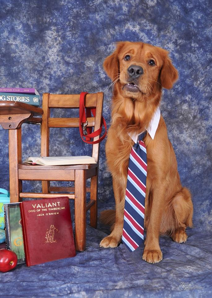 Bean wearing tie sitting next to school desk with books