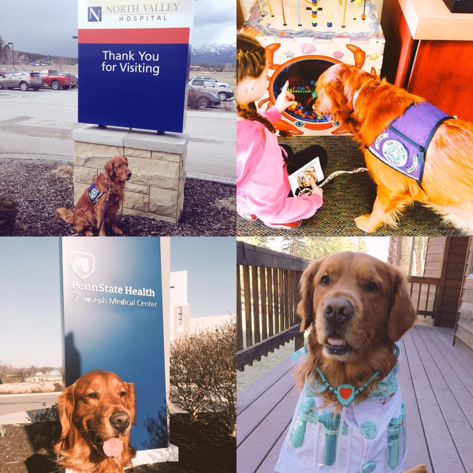 Collage of Bean as therapy dog