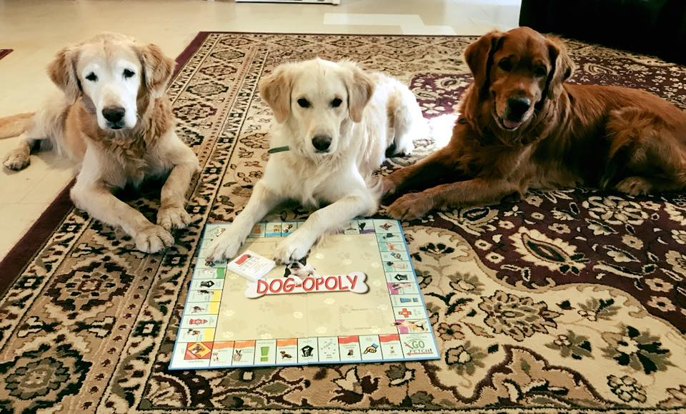 Trooper, Q & Bean playing Dogopoly