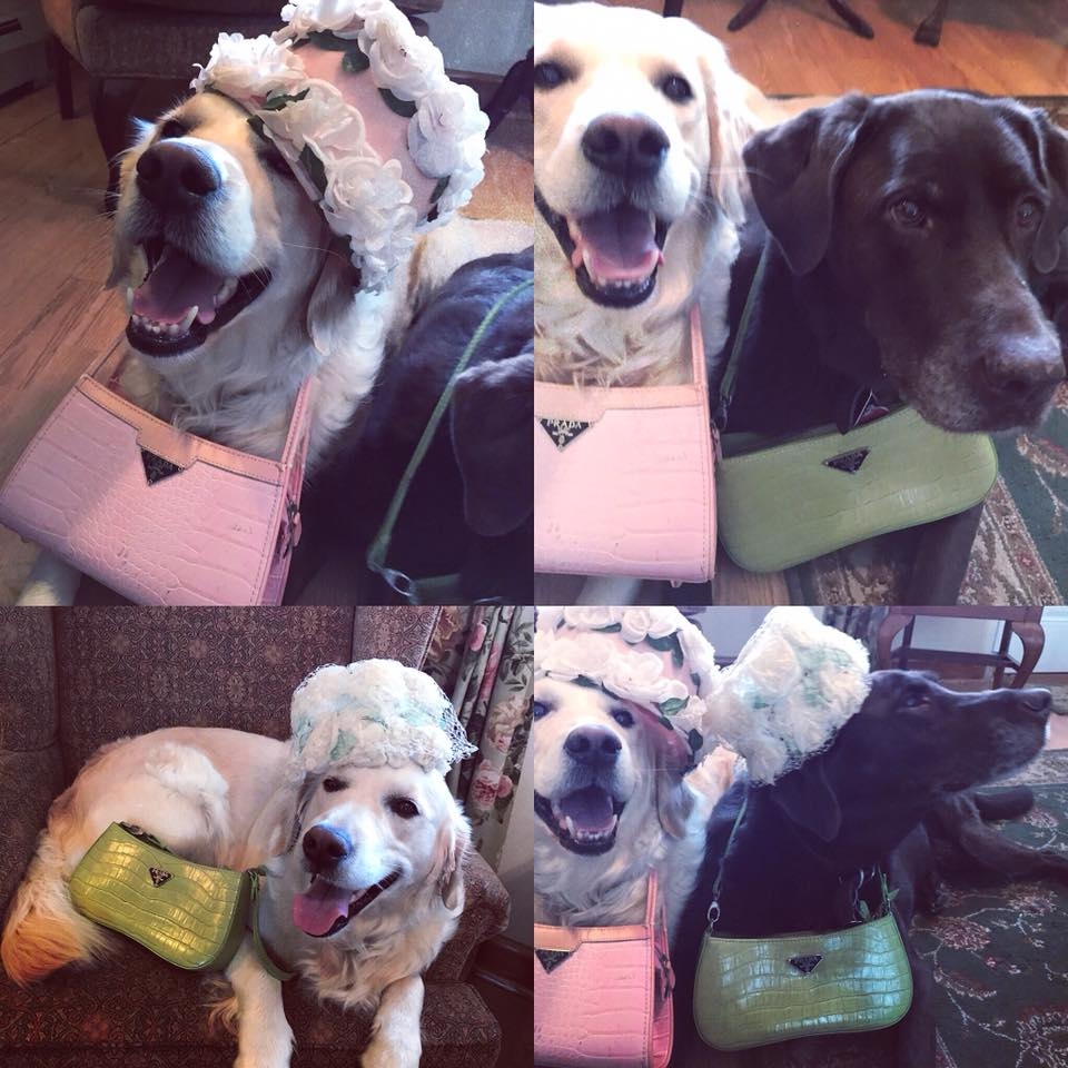 Q & Maggie dress up for Royal Wedding with hats and purses