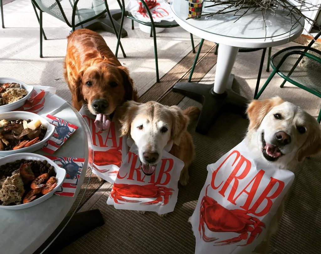 Bean, Trooper & Q in bibs with their surf & turf special