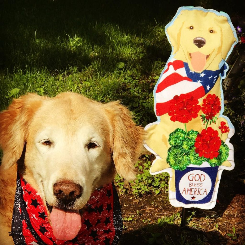 Trooper in patriotic neckerchief with Golden Retriever flag